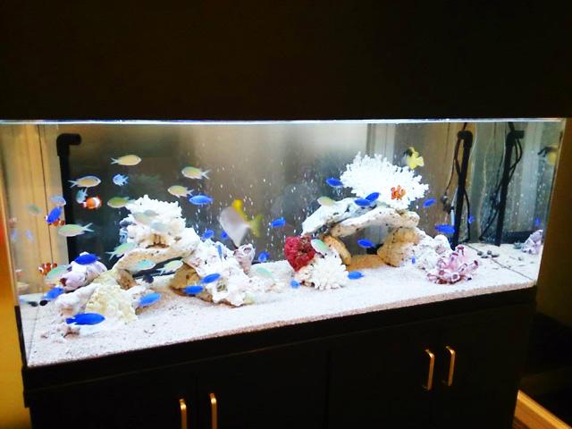 水槽にはたくさんの熱帯魚