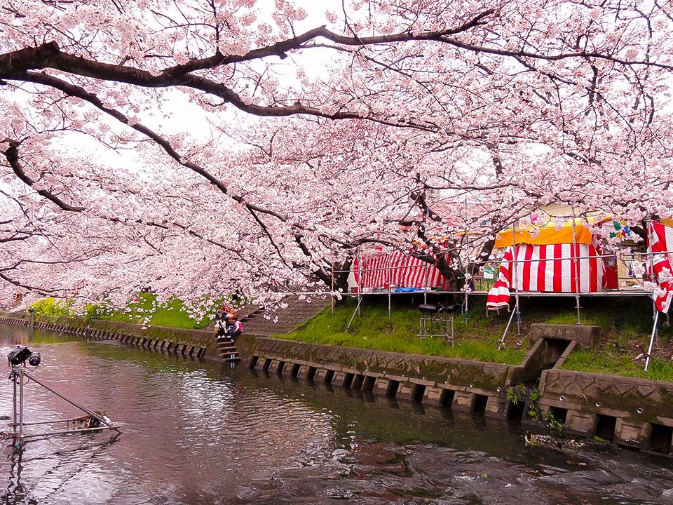 名古屋のお花見